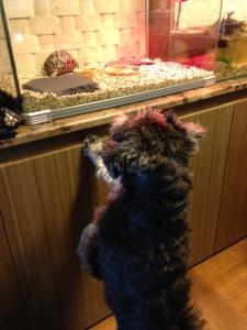 Doggie Live TV