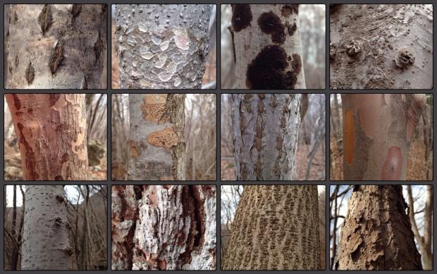 bark og trestammer