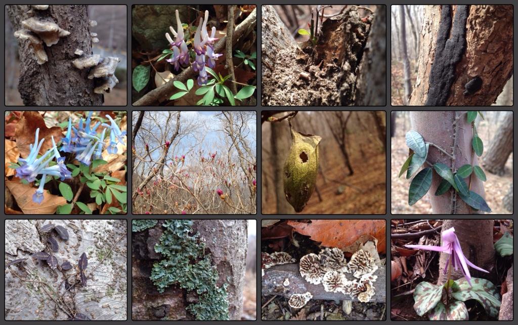 Blomster, lav og andre vekster