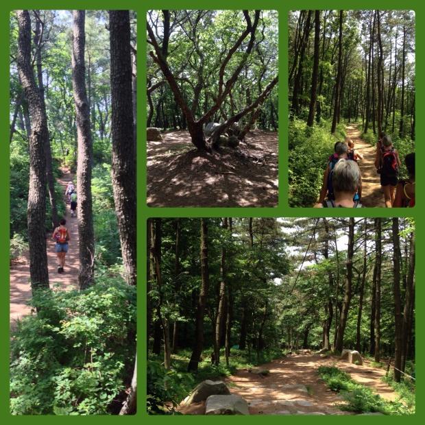 skogsbilder