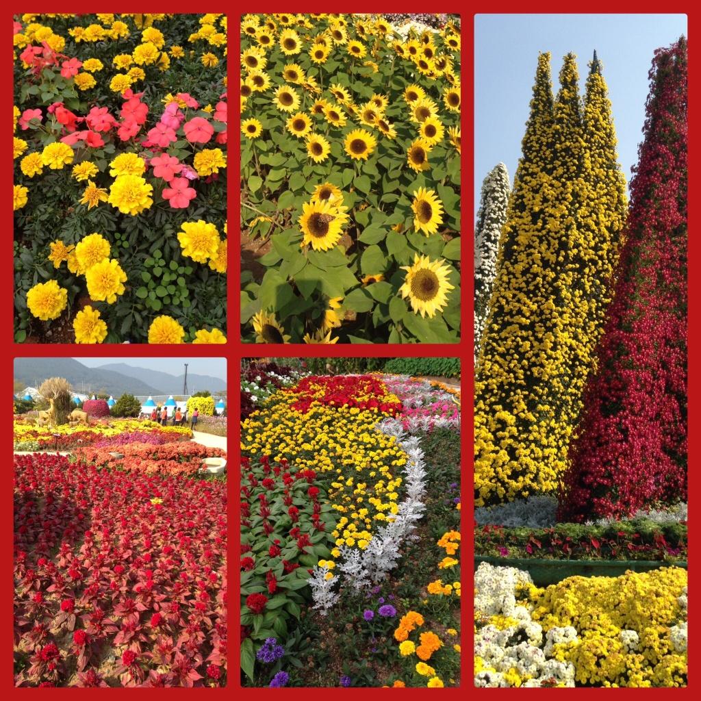 blomsterfestival
