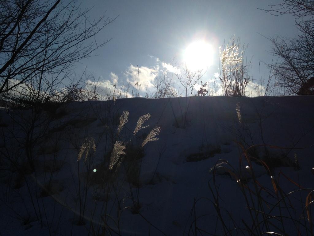 påskevær i januar